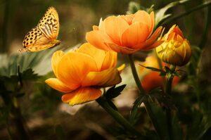 Sadzić kwiaty