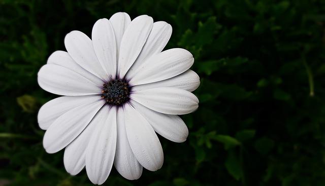 Biały kolor