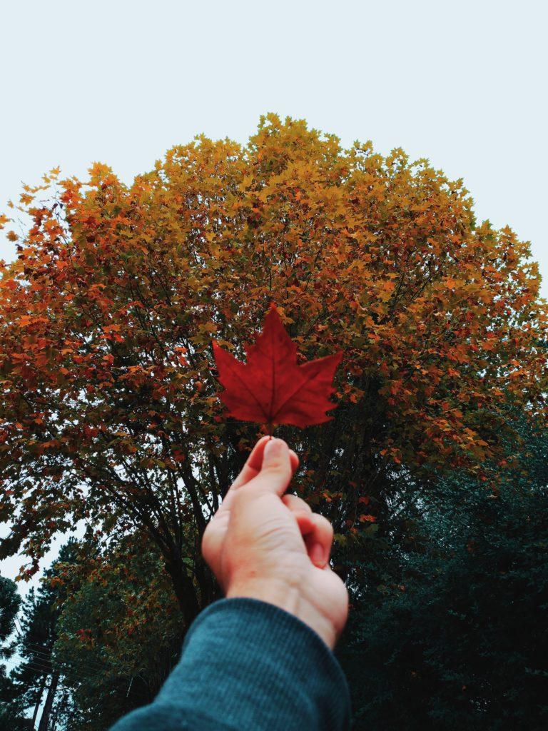 Zbierać liście