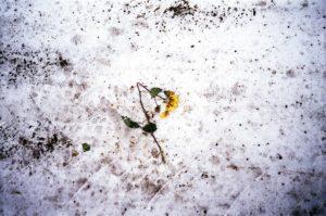 Brudny śnieg